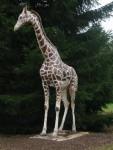 Copie de giraf (19)