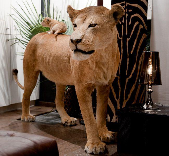 49 Lionne Debout