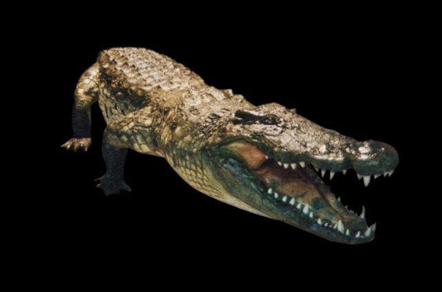 krokodil aligator