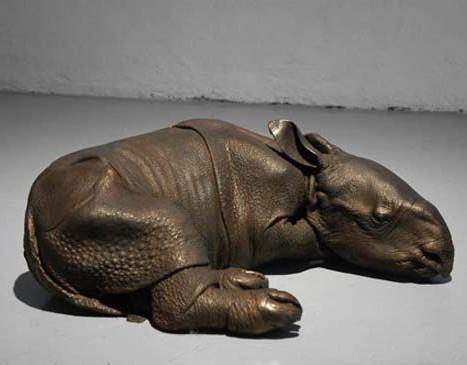 Bébé rhinoceros Indien