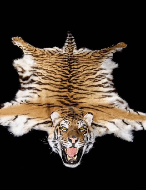 Tigre Carpette-Modifier