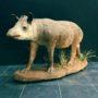 1931 tapir