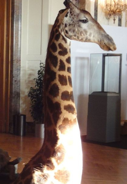 Cape de girafe au sol
