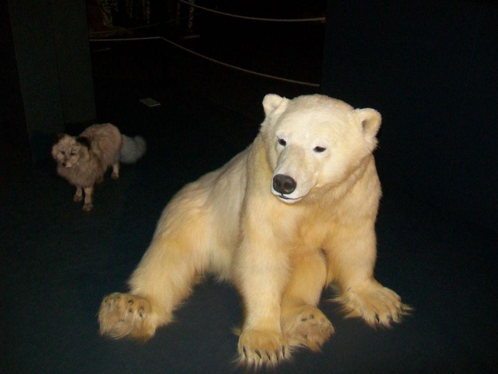 sos animal (1)