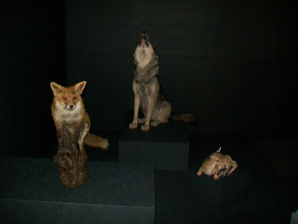 sos animal (3)
