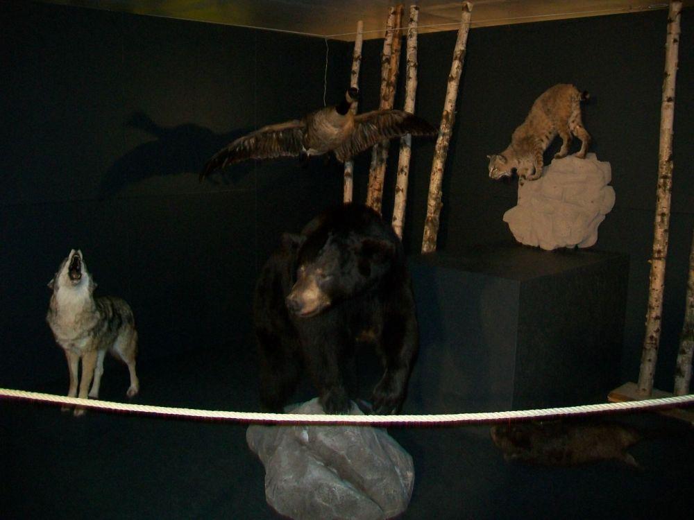 sos animal (8)