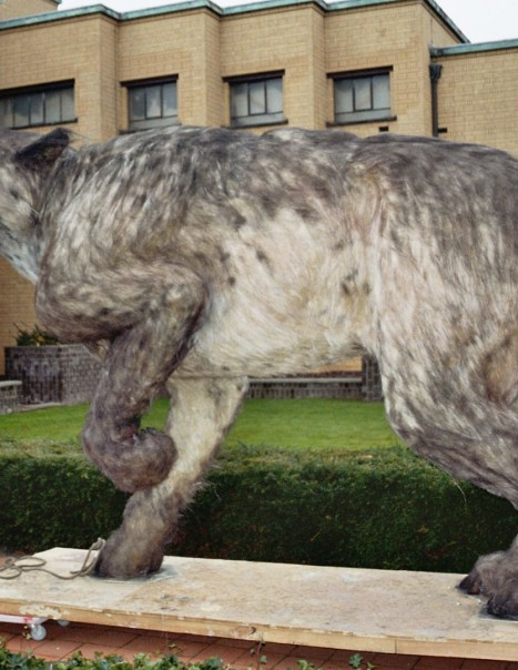 Andrewsarchus mongoliensis