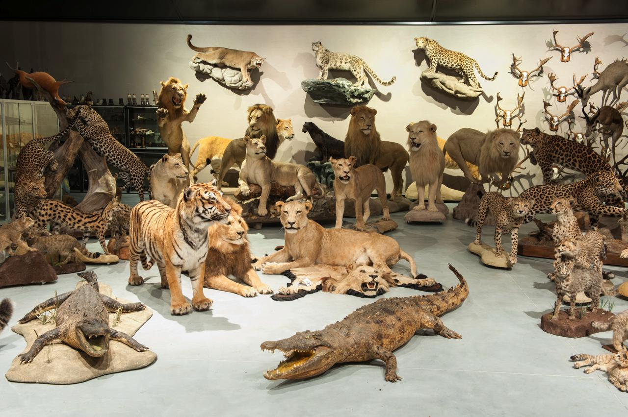 Private taxidermy collection | Masaï Gallery