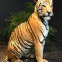 2164 tigre du Bengale