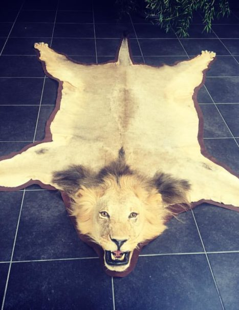 1774 carpette lion
