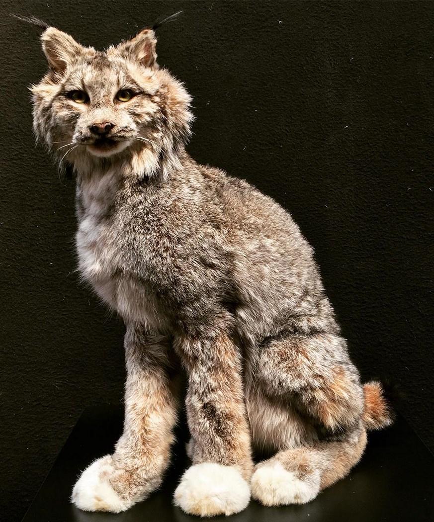1985 Lynx du Canada