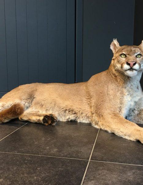 1275 Puma (1)