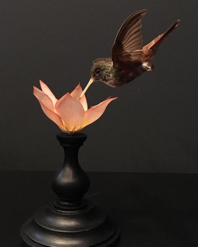2599 colibri